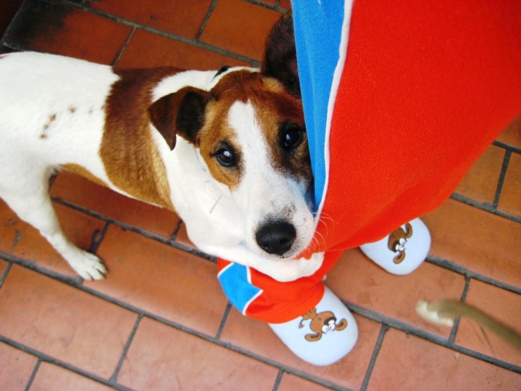 pet on wedding - que nuestros perros participen de nuestra boda